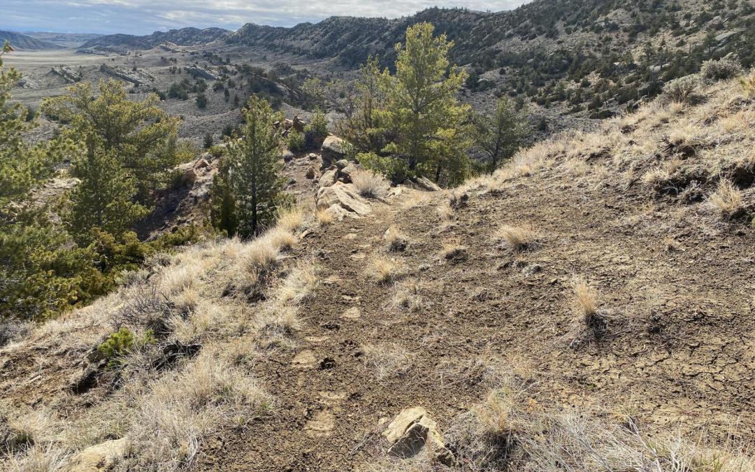 Grizzly Bear Tracks – Cody, WY